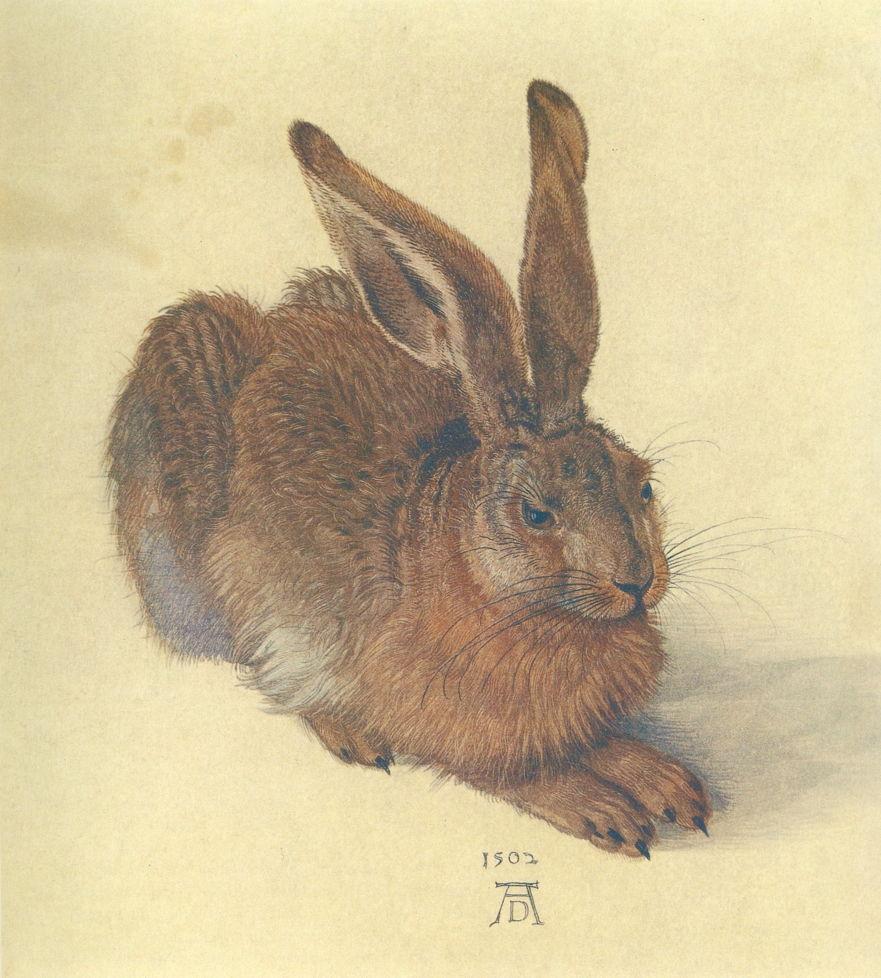 Albrecht Dürer, Hare, 1502, watercolour and bodycolour on paper, 25 x 22.5 cm. Albertina, Vienna (WikiArt).