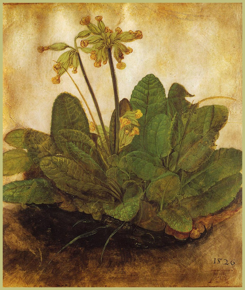 Albrecht Dürer, Primula, 1526, watercolour on paper, 19 x 17 cm. National Gallery of Art, Washington DC (WikiArt).