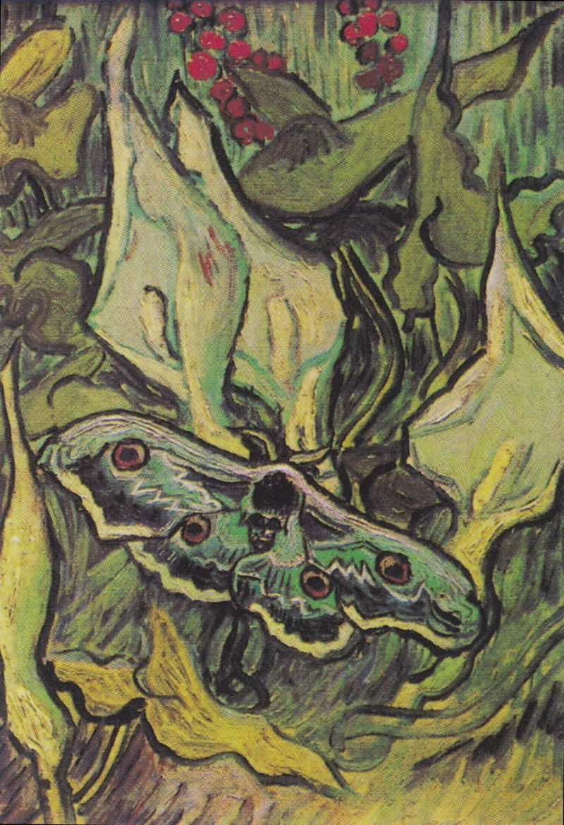 Vincent van Gogh, Giant Peacock Moth (1889), oil on canvas, 33.5 x 24.5 cm, Van Gogh Museum, Amsterdam. Wikimedia Commons.