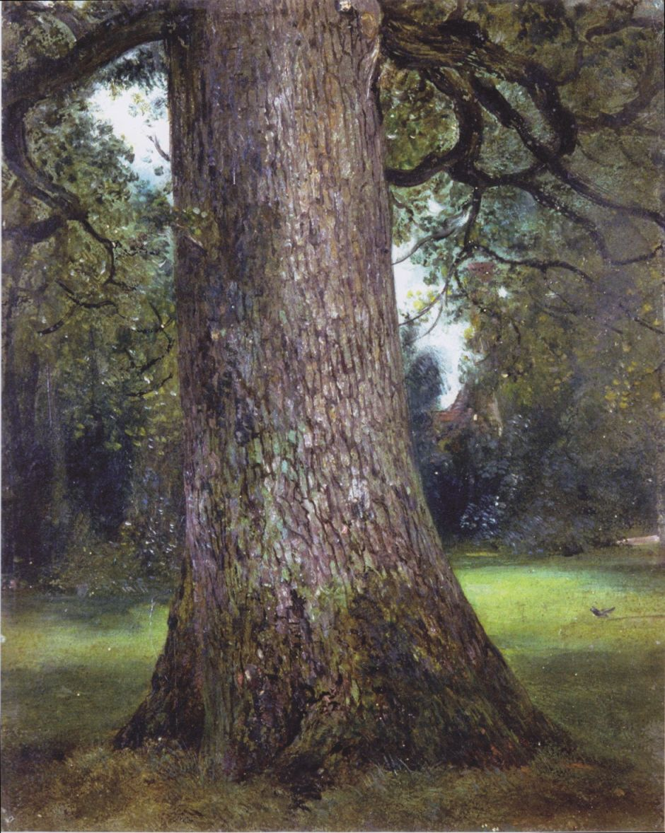 John Constable (1776–1837), Study of the Trunk of an Elm Tree (c 1821), oil on canvas, 30.6 x 24.8 cm, V&A, London. Wikimedia Commons.