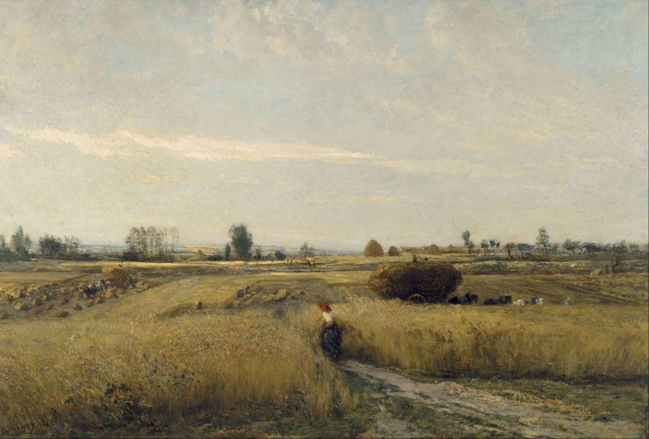 daubignyharvest