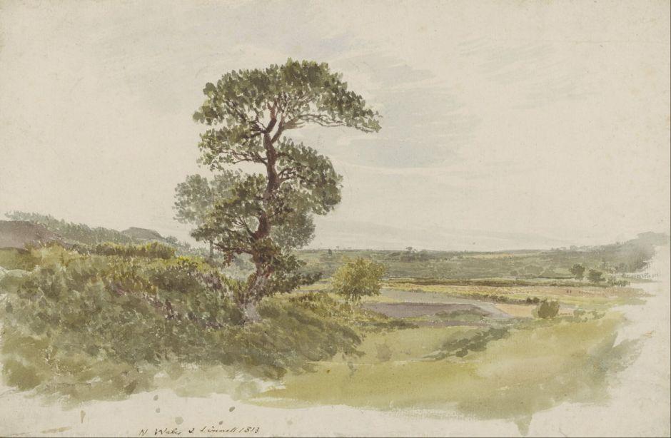 linnelllandscapesnowdoniatree