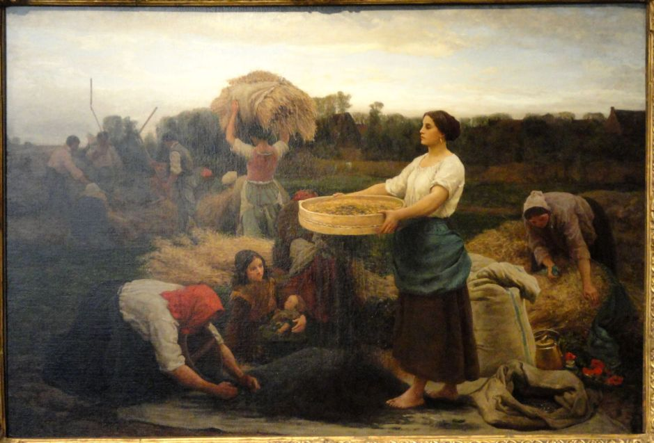 bretonharvestingrapeseed