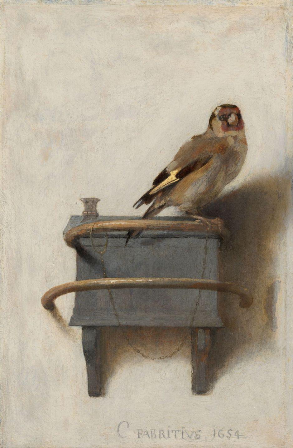 fabritiusgoldfinch