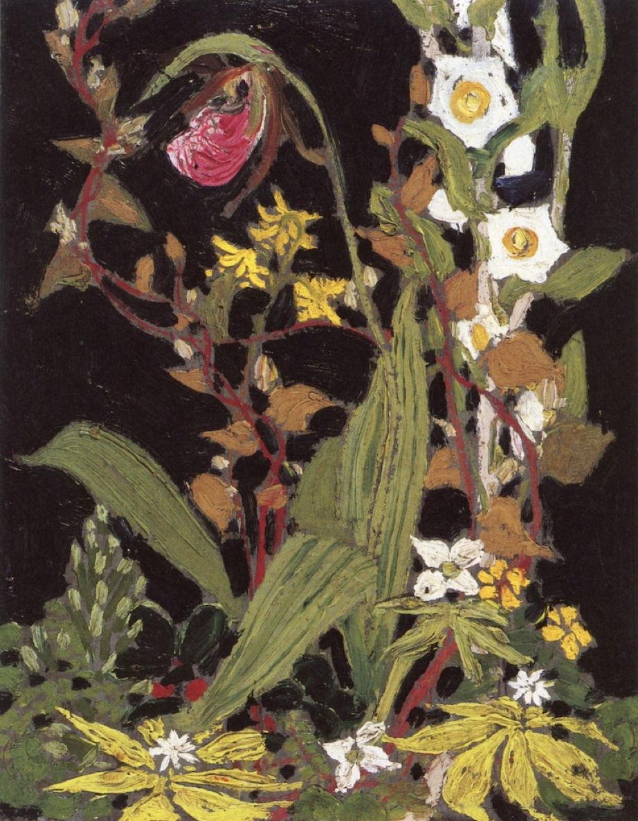 thomsonorchidsalgonquinpark