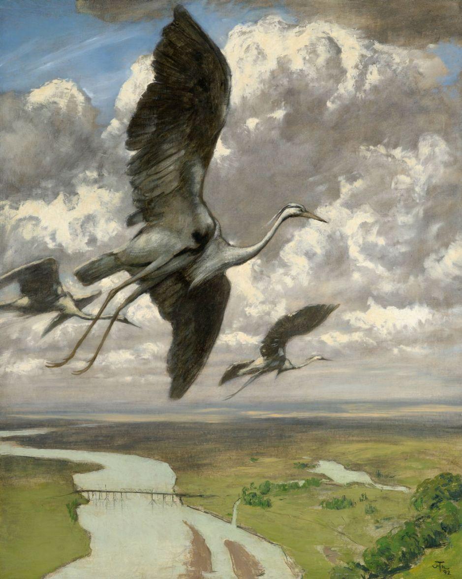 thomawondrousbirds