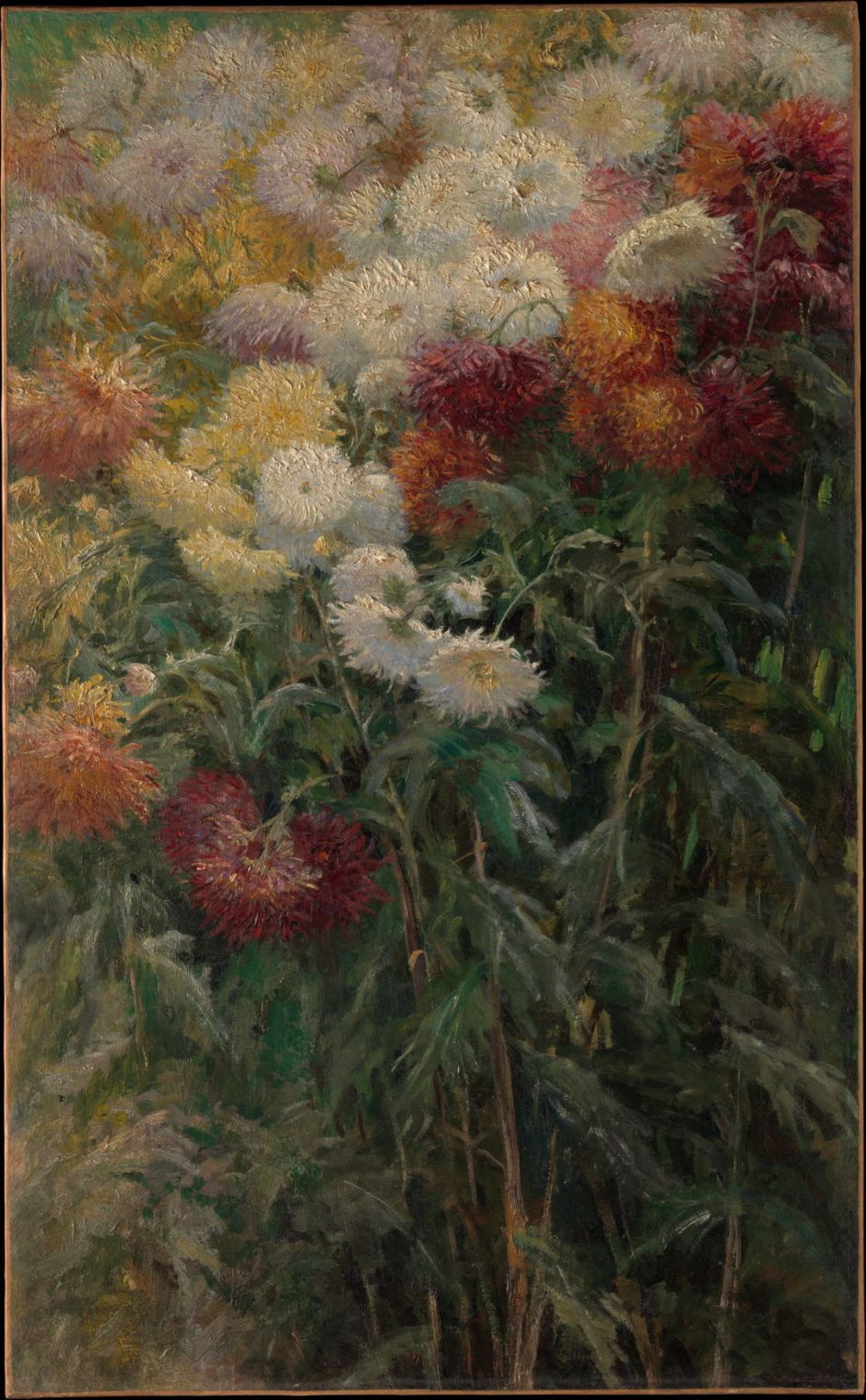 caillebottechrysanthemums