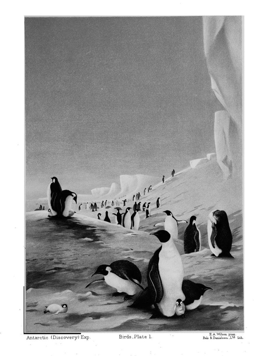 wilsonnaturalhistorypenguins1