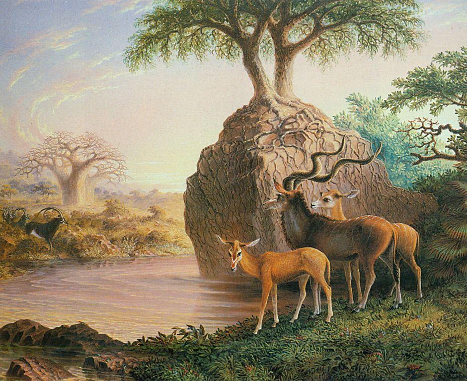 Koodos, Luisi River, Zambesi Valley (1874)