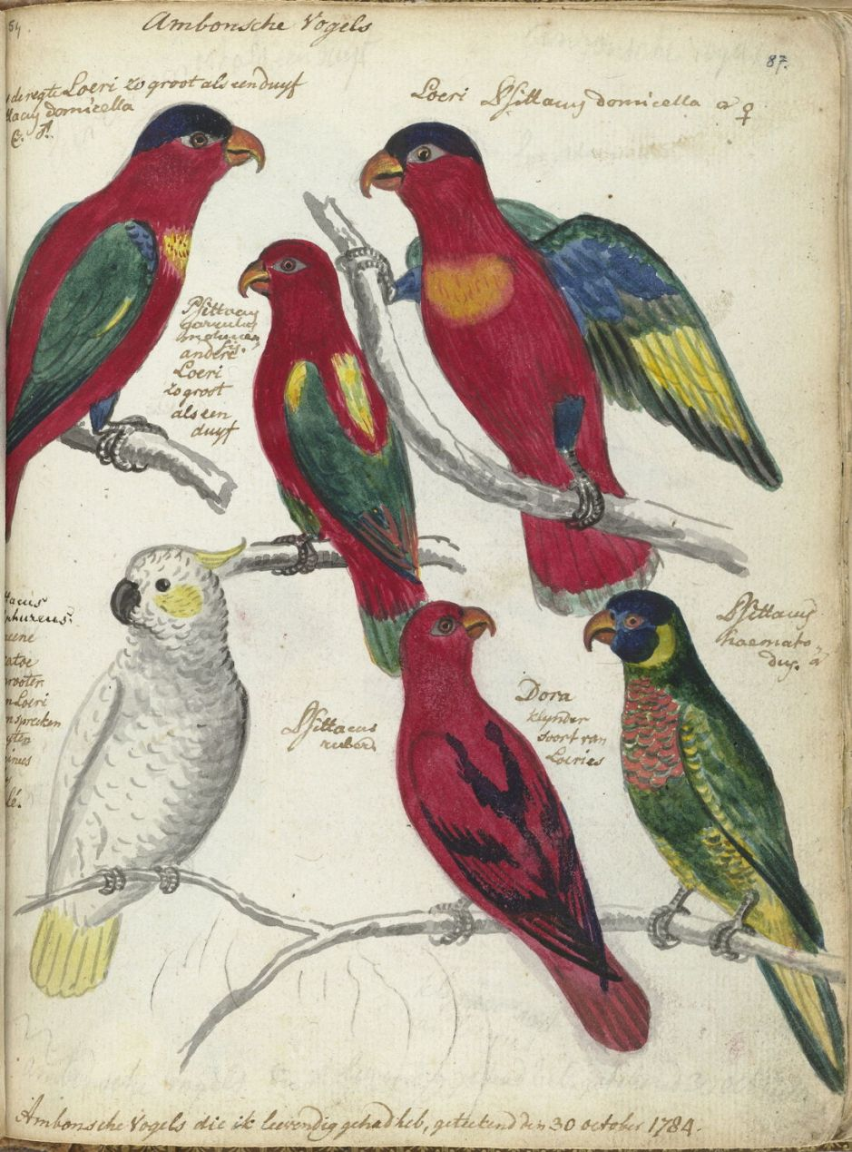 brandesambonbirds