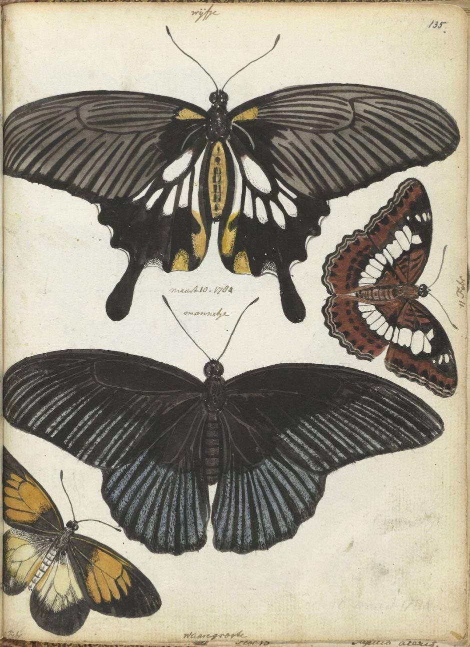 brandesindianbutterflies