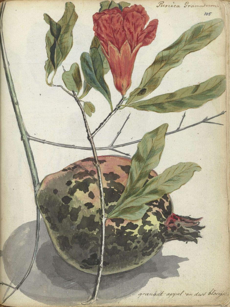 brandespomegranate
