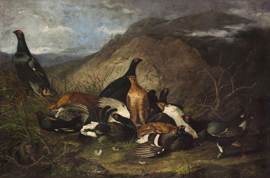 audubonblackcocks