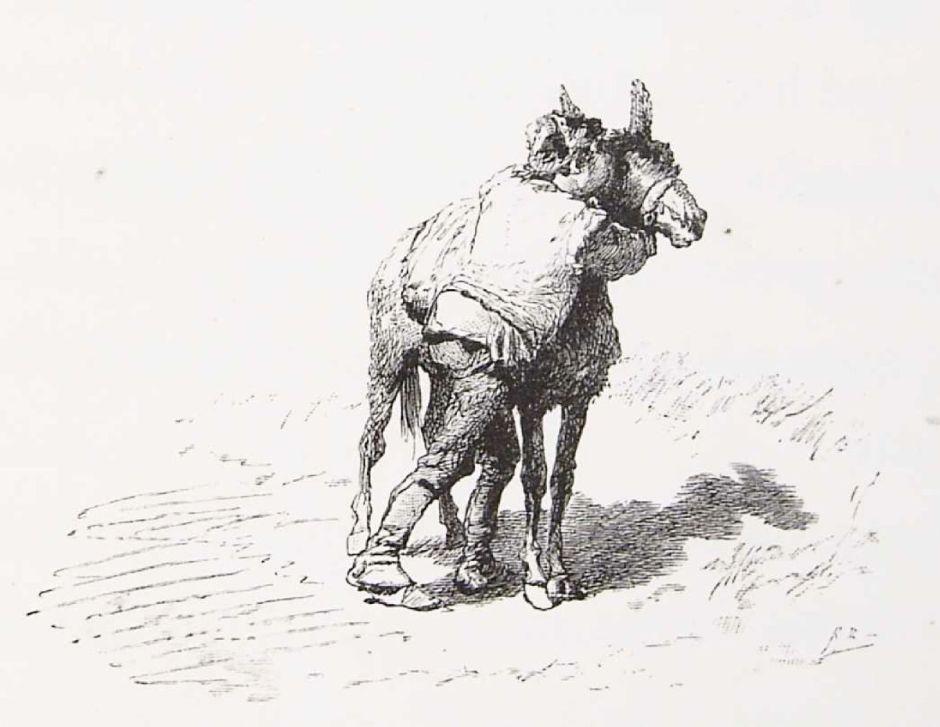 balaca28